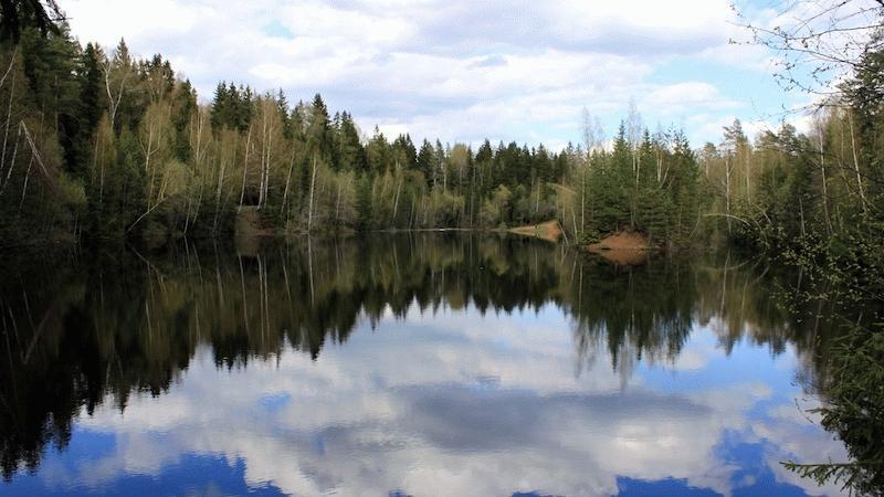 Берег озера с кусочком березового леса