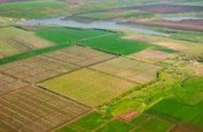 Как заказать межевание земельного участка