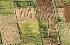 Передача земельного участка в безвозмездное пользование