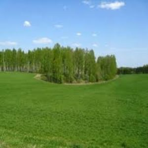 Как изменить разрешенное использование земельного участка
