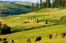 Классификатор вида разрешенного использования земель