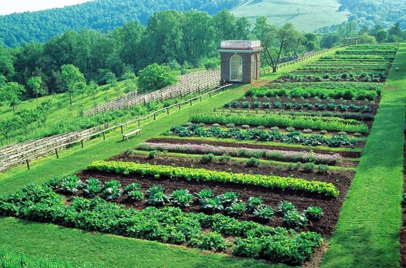 Огородничество - один из вариантов использования земель СНТ